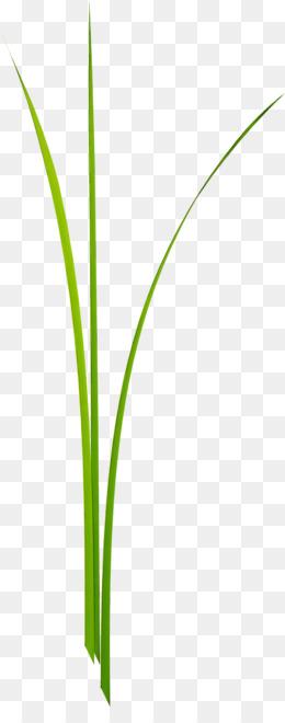 Capim Limao Fundo Png Imagem Png Folha De Grama Verde Tronco