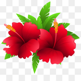 Shoeblackplant Fundo Png Imagem Png Shoeblackplant Flor