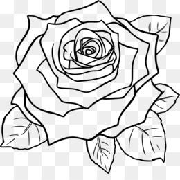 Branco Planta Fundo Png Imagem Png Rosa Negra Clip Art
